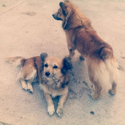 """😍👌 My two dogs. I've called one of them """"Alien"""" because of Tokio Hotel 💓 Doris Alien Rest Onguard Love Dogs Streetdogs Mom Son AsMotherAsSon Family Pets TokioHotelTour TokioHotel TokioHotel TokioHotelIsBack Tokiohotelinstagram Aliens Mexico Mexican Animals Crazy Looovee"""