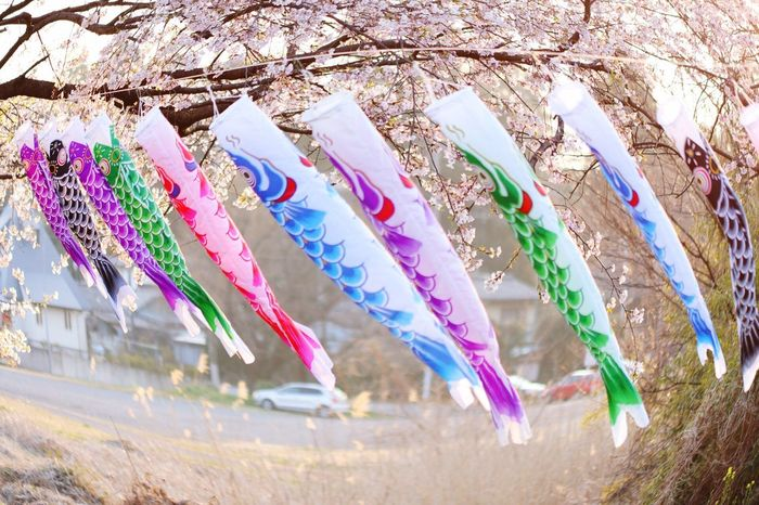 Carp Streamer Close-up Nature Day No People Scarecrow Outdoors Protection Pollination Pistil Freshness Pink Color Animal Themes One Animal Spotted Plant Millennial Pink Beauty In Nature