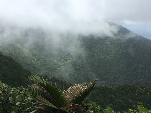 Dominica Beauty In Nature Day Green Color Growth Landscape Mountain Nature No People Outdoors Plant Scenics Sky Tranquil Scene Tranquility