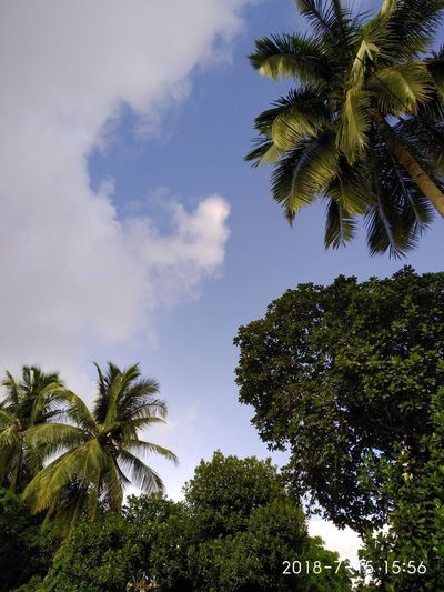 Trees makes everything beautiful. Cloud - Sky Cloud Palm Tree Forest Coconut Palm Tree Coconut