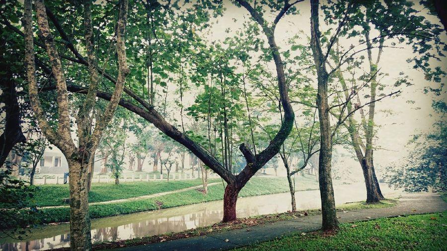 Unique Tree by P4lsoe