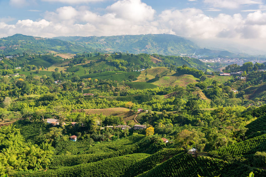 Aerial view of coffee farms near Manizales, Colombia Agriculture Coffee Colombia Farm Green Hills Latin Manizales Natural Nature Plant Travel Tree Bean Caldas Chinchina Countryside Forest Hill Jungle Mountain Outdoor Rainforest South America Valley