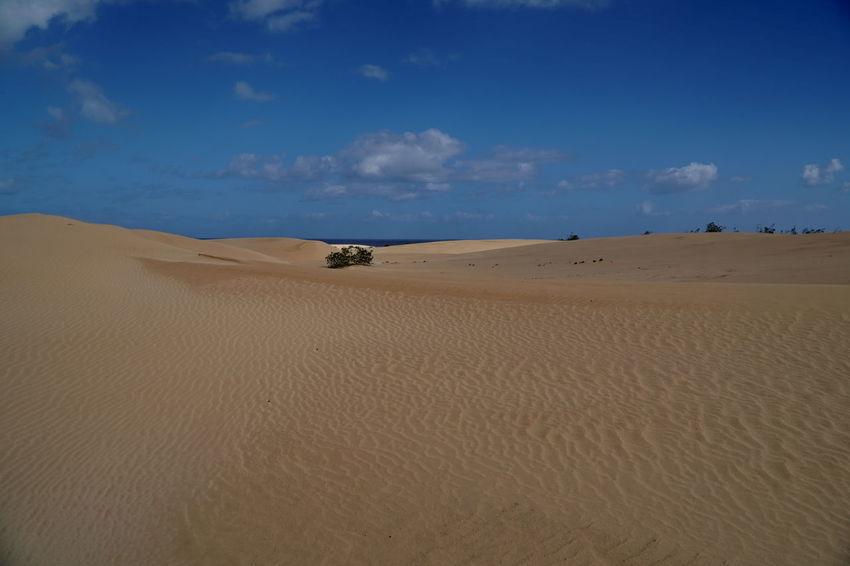 c11 Fuerteventura Arid Climate Beach Beauty In Nature Cloud - Sky Corralejo Day Desert Landscape Mammal Nature No People Outdoors Physical Geography Sand Sand Dune Scenics Sky Tranquil Scene Tranquility