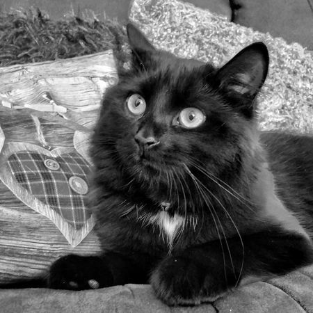 Cat Catoftheday Cat♡ EyeEm Best Shots - Black + White Black And White Photography Cats Of EyeEm