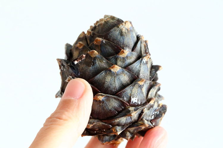 Autumn EyeEm Nature Lover Hello World Arolla Pine Arve Biophilia Blue Sky Closed Cone Conifer  Connection With Nature Finger Hand Holding Human Hand One Person People Pine Cone Pinus Cembra Purity Real People Swiss Pine Switzerland Unrecognizable Person White Background The Minimalist - 2019 EyeEm Awards