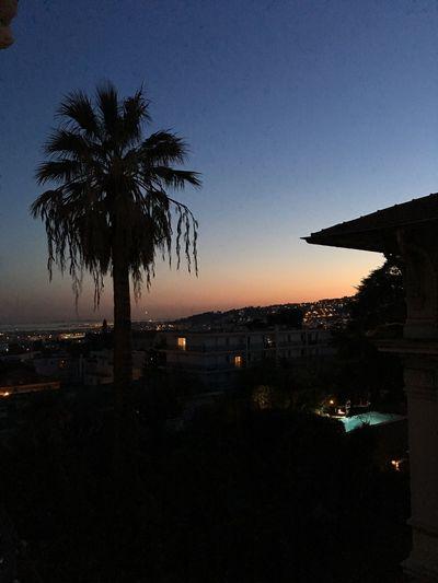 📸 Palm Tree Sea Sunset First Eyeem Photo