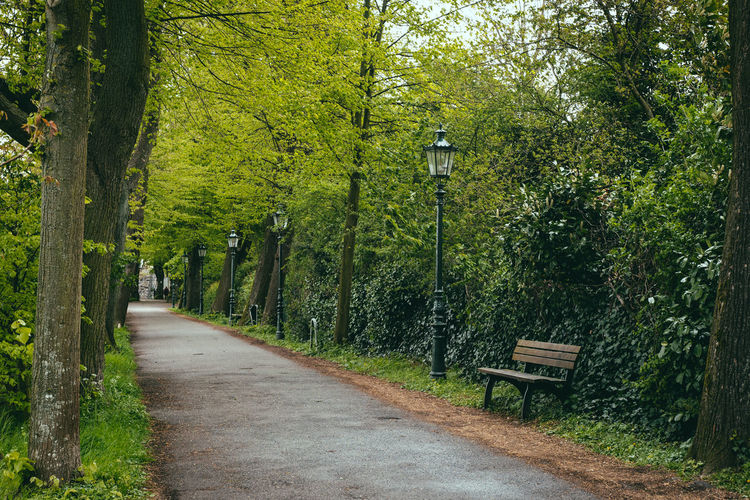 Empty bench by footpath in park
