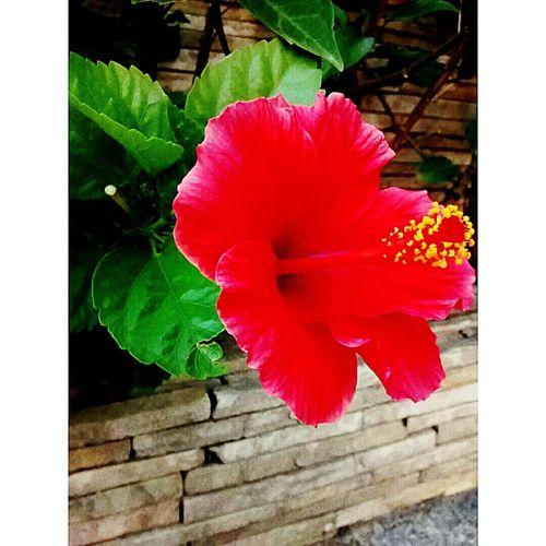 Hello World !! Love ♥ flowers ?