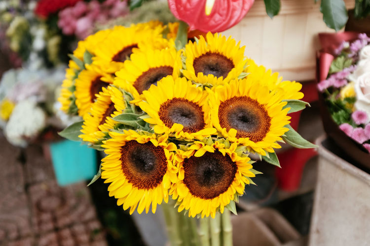Flowering Plant Flowershop On The Street🌷💕 Plant Sunflower Yellow Flower Flower Flowershop Plants And Flowers
