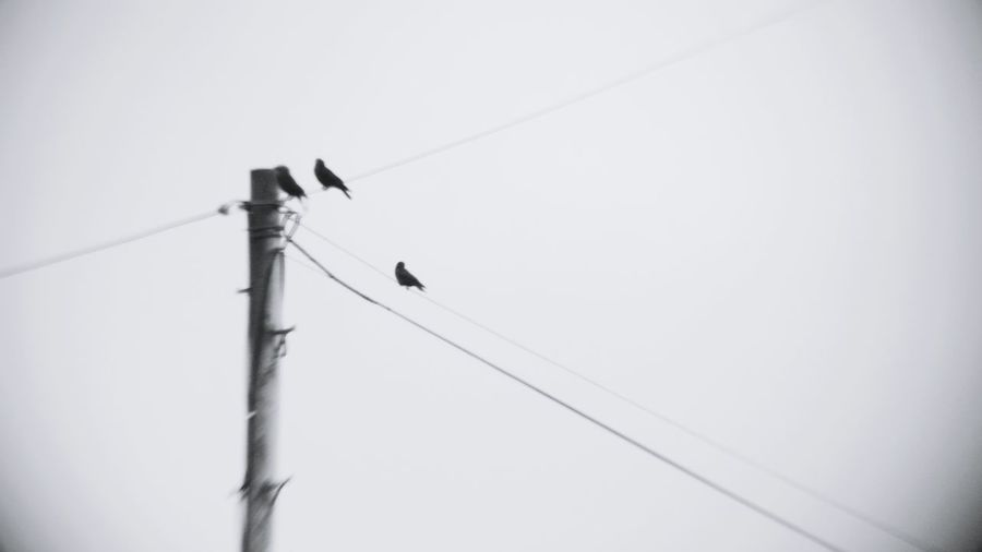 Camkix Abstract Photography Blackandwhite Bird Birds Wire
