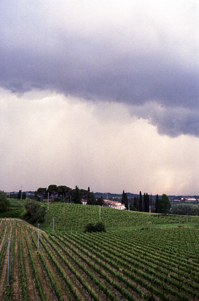 Nature Rain Rainy Days The Traveler - 2018 EyeEm Awards Tree Beauty Clouds Clouds And Sky Italy Rainclouds Travel Destinations Vineyard