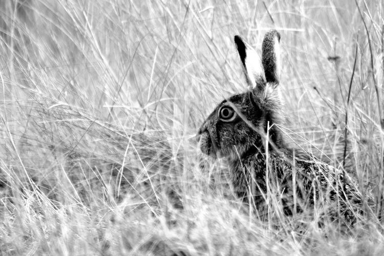 Rabbit ... Animal Themes Animals In The Wild Close-up Grass Mammal Nature One Animal Rabbit