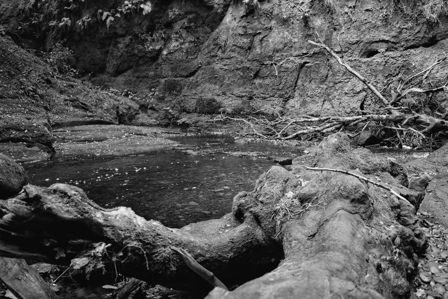 Trunk on the river Water Scenics Tranquility Nature Non-urban Scene Tranquil Scene Outdoors Day Beauty In Nature Remote Solitude Rocky Rock Formation Devil's Pulpit Scotland Wilderness Tree Geology Monochrome Photography