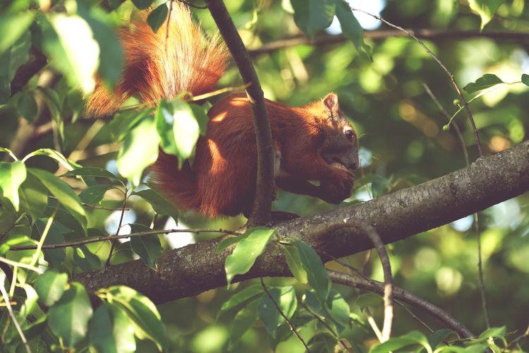 #eichhörnchen