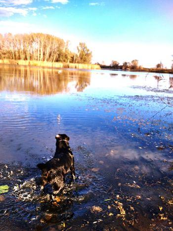 Bird Water Swimming Pets Dog Lake Winter Reflection Sky Animal Themes