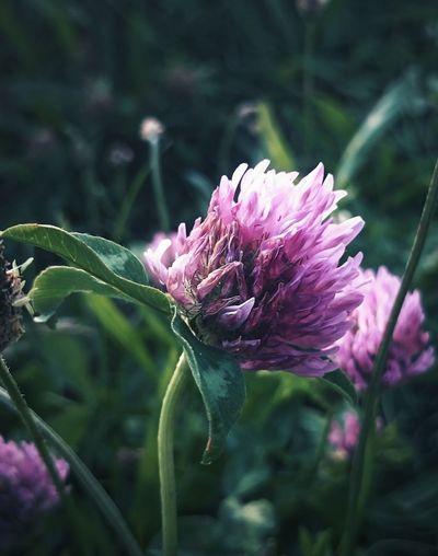 :-) Taking Photos Flower Purple Flower Grass