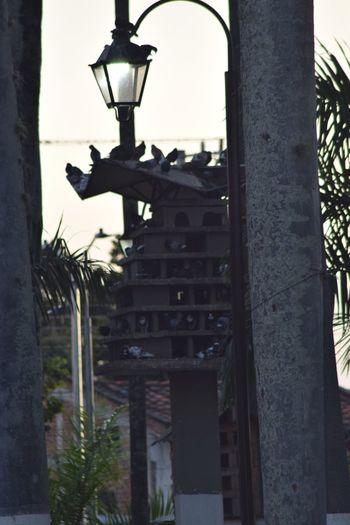 Palomar Architecture Built Structure Tree Building Exterior Plant Building No People