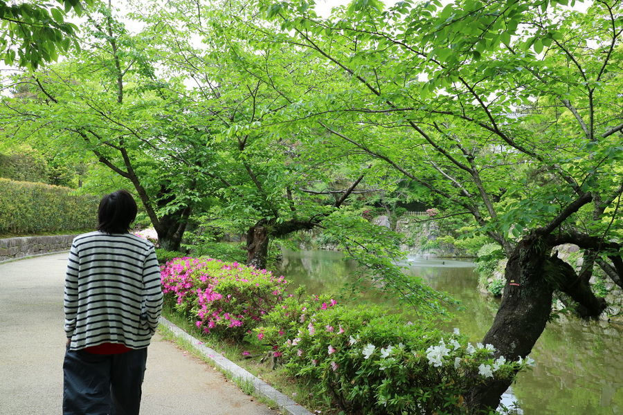 a stroll in the park Riverside Stroll In The Garden Flowerbed Beauty Flowerbeds Flowerbed Decorations Garden Park - Man Made Space Park Tree Standing Men Rear View Plant Casual Clothing Green Color Blooming Petal Pink Pollen In Bloom Plant Life Fragility Growing My Best Travel Photo My Best Travel Photo EyeEmNewHere A New Beginning