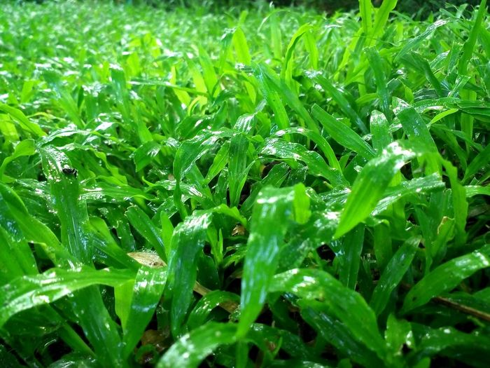 Growth Nature Green Color Freshness Day Growth Close-up Grassland Grass Area Grasslands Grass Grasssculpture Grassy Grasssogreen Grasses Outdoor Pictures
