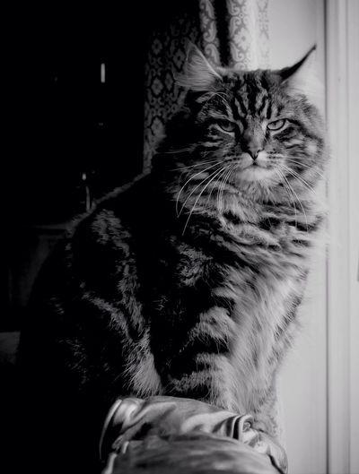 a Cat Pussycat