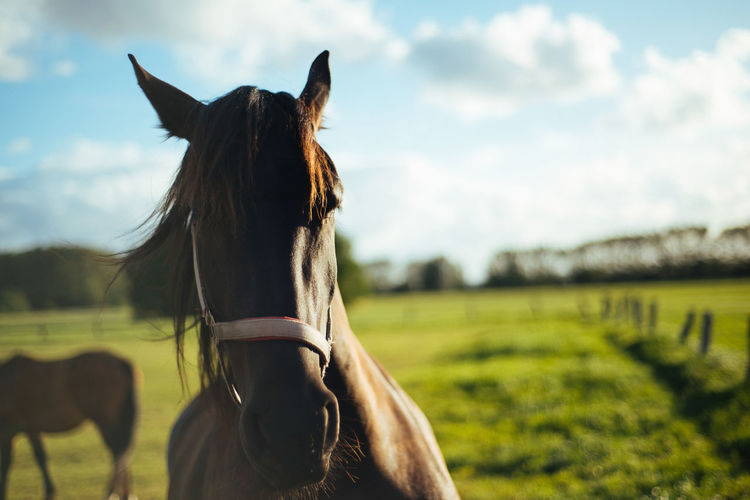 Horse on field against sky during sunny day