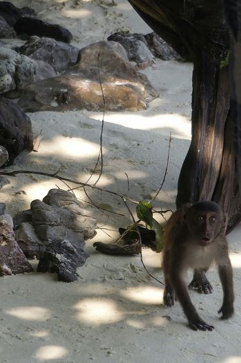 One Animal Animal Themes Domestic Cat Pets Mammal Domestic Animals Feline Shadow No People Day Nature Outdoors Beauty In Nature Sea The Beach Life Animals In The Wild Animal Wildlife Monkey