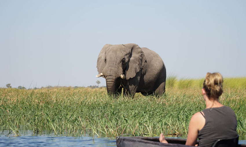Rear view of elephant on land against sky