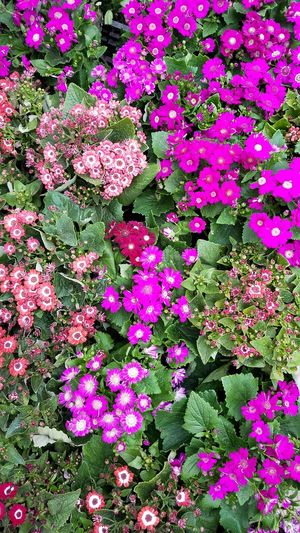 Flower Pink Color Outdoors Beauty In Nature