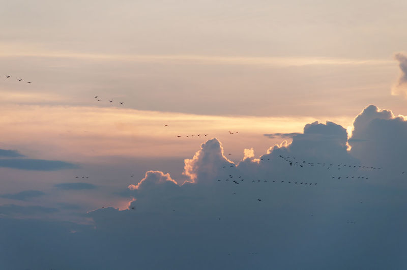 Low Angle View Of Birds Flying Against Cloudy Sky During Sunset