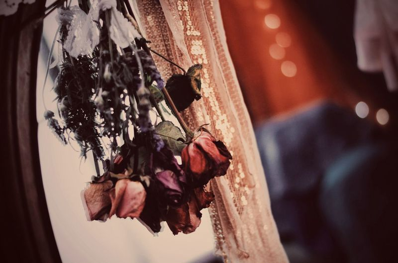 After the show Green Room Back Stage Hanging Flowers EyeEm Selects Hanging Close-up