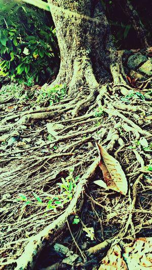 Rootz Beautiful Eve Reborn Clicks
