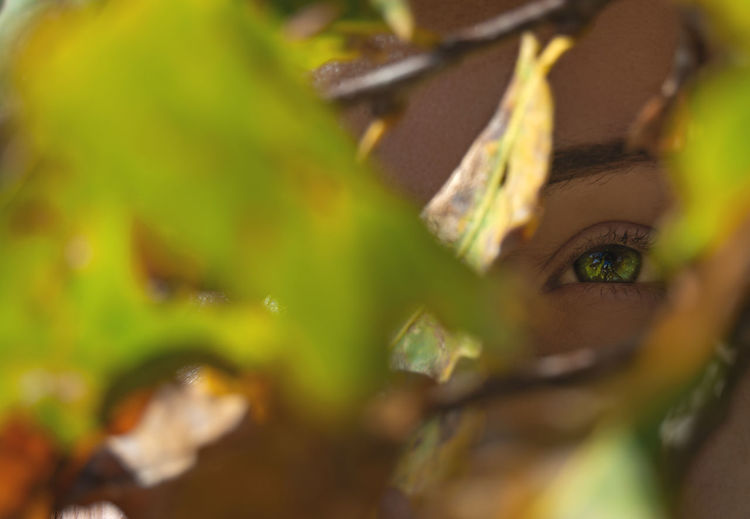 Selective Focus Plant Part Leaf Close-up Green Color Portrait Looking At Camera One Person Women Young Women Young Adult Adult Plant Human Body Part Beauty Body Part Nature Human Eye Eye Beautiful Woman Human Face Outdoors Leaves Autumn colors Autumn Portrait