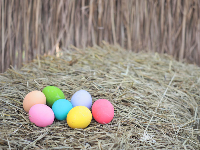 Colorful eggs on the hey for hunting game on Easter day. Celebration Close-up Colorful Day Easter Easter Egg Egg Food Fragility Game Grass Hay Hunt Multi Colored Nature No People Outdoors