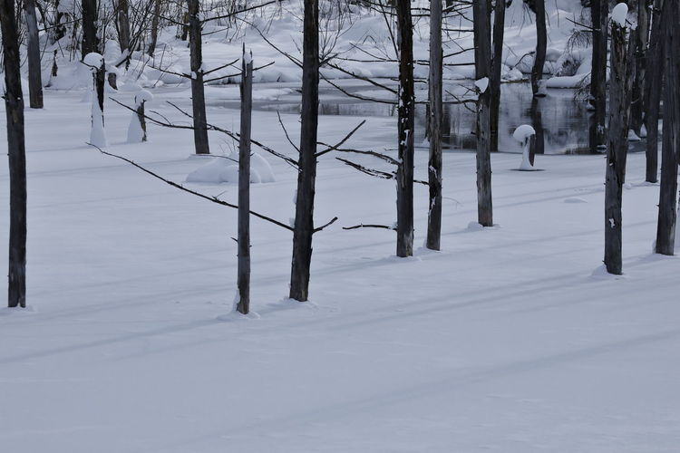 Nature Photography Pond Winterscapes Wintertime Beauty In Nature Cold Temperature Day Landscape Minimalism Nature Nature_collection No People Outdoors Scenics Snow Snow Covered Tranquil Scene Tranquility Tree Tree Trunk Tree_collection  Water Winter Winter Trees Winter_collection