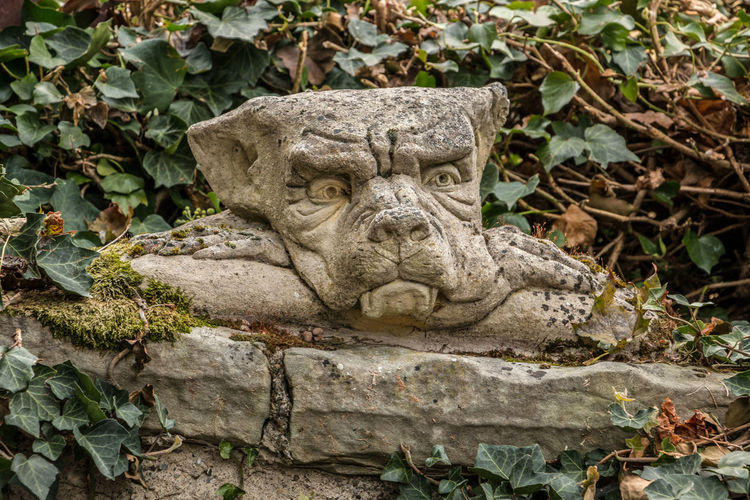 Little goblin head on a stone wall like out of a fairytale Art And Craft Craft Sculpture Statue Creativity Plant Part Representation No People Leaf Day Nature Plant Solid Close-up Focus On Foreground Human Representation Stone Material Old Carving