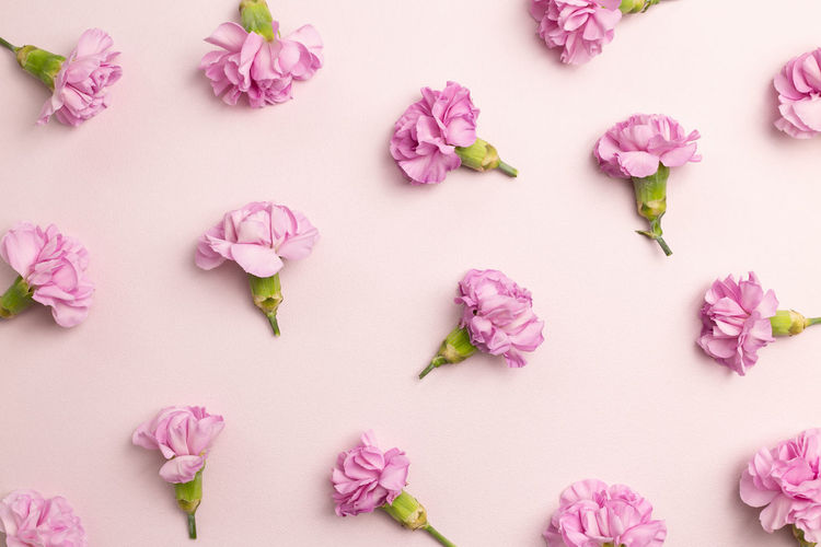 High angle view of pink flowers against white background
