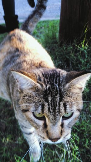 Cat Nature Feirce  Cu Kitty EyeEm Nature Lover Eyemnaturelover EyeEm Best Shots EyeEmBestPics Showcase: November