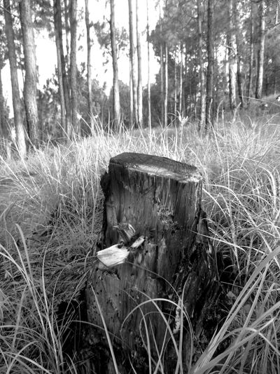 There is more to me than death. I give way to life in every form Photojournalism Deforestation Firewood Bare Tree Black And White Friday The Still Life Photographer - 2018 EyeEm Awards