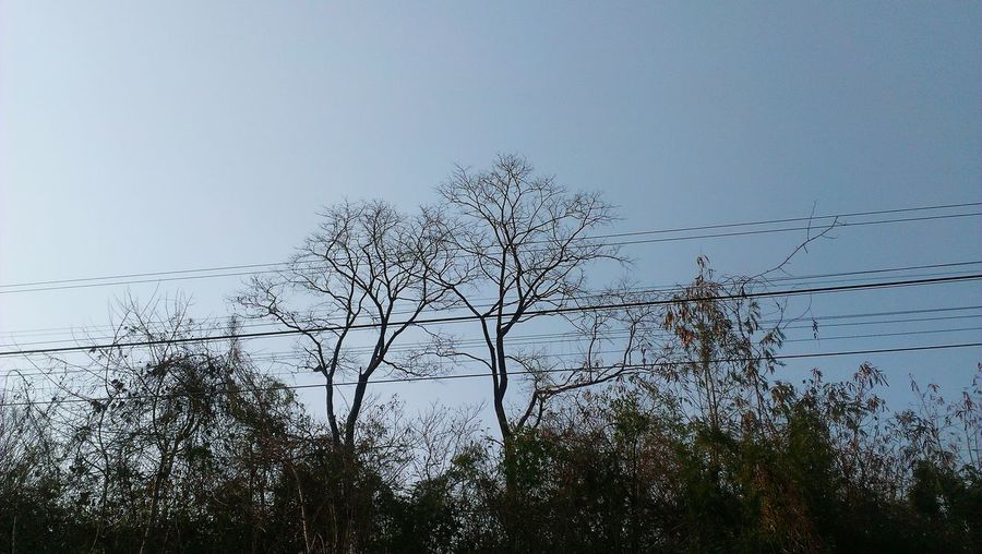 Tree and electricity pylon against clear sky