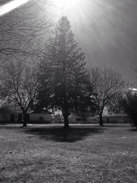Tree Blackandwhite Woods