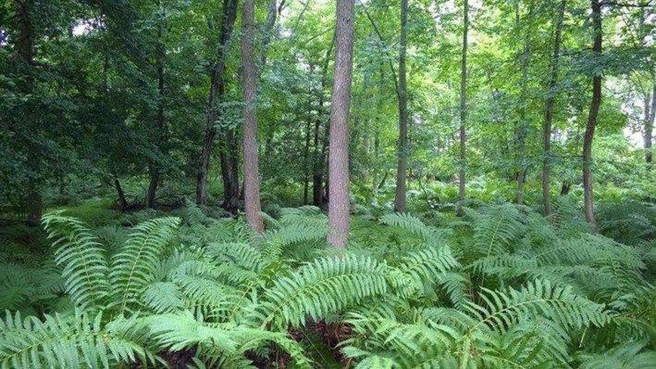 A walk through the woods ATouristInMyOwnCity ABeautifulMorning EyeEm Best Shots InTouchWithNature