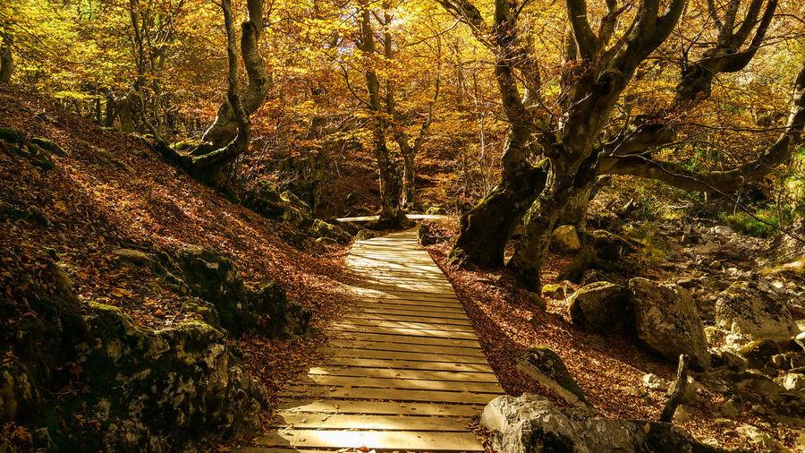 Nature Outdoors Sunlight Autumn Autumn🍁🍁🍁 Tree Autumn Trees Autumn Path Nature Path Nature Pathway Autumn Colors Autumn Colours Autumn Colors Nature Autumn Colors,