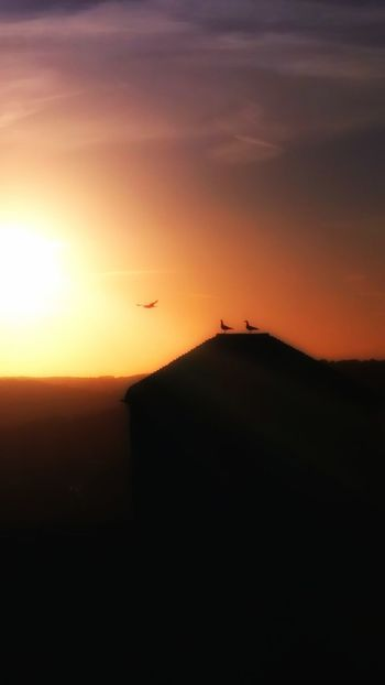 Sunset at Dover Castle Sunset Silhouette Nature Flying Bird National Heritage Dover England Castles Dover Castle Castle Walls Colorful Lights Dover, England Glowing Sky Blured Effect Birds Silhouette