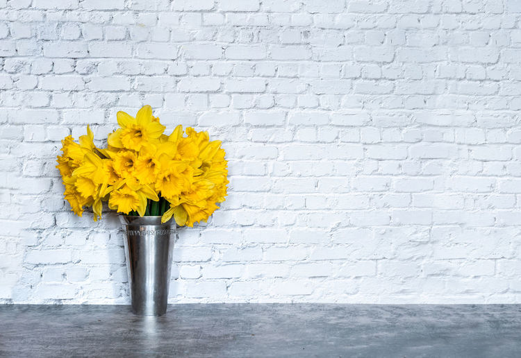 Close-up of yellow flower in vase against wall