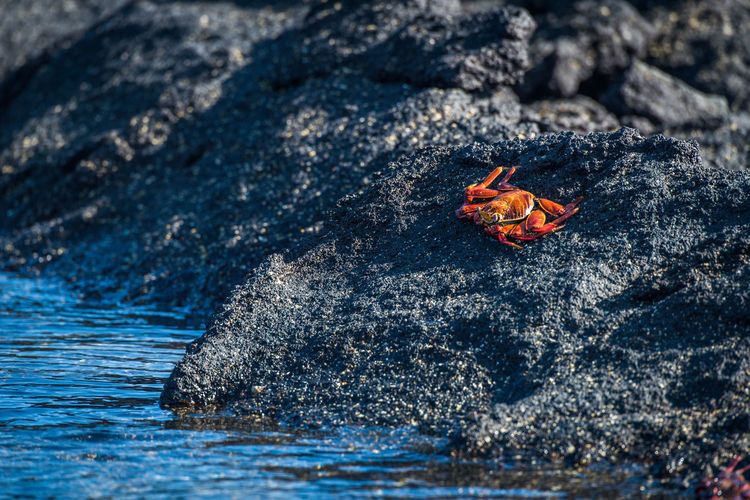 Crab on rock at beach