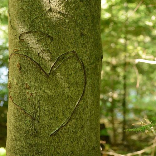 Forest walk 🌿💚 Forest Photography Forest Park Forestwalk Green Tree Heart Memories Love