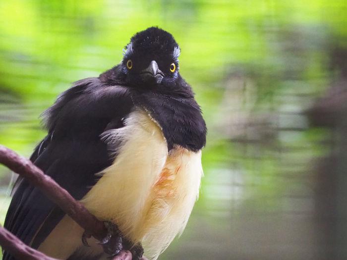 Close-up of black bird perching outdoors