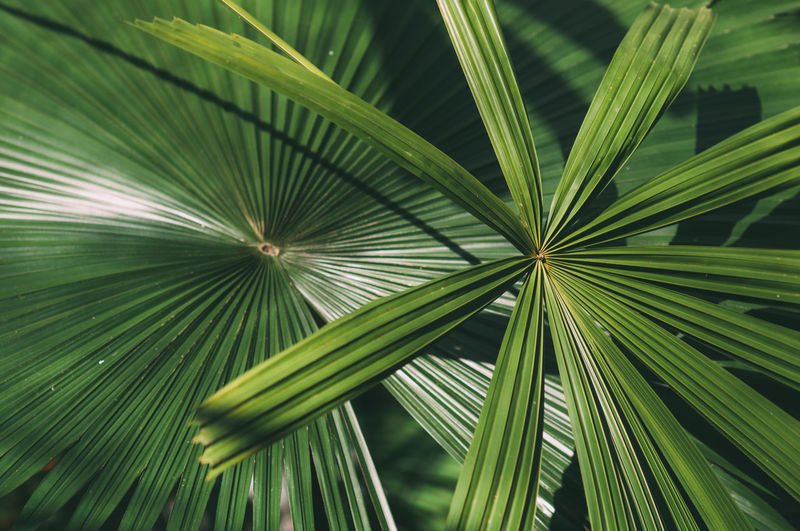 palm leaf Green Color Leaf Palm Leaf Palm Nature Close-up Growth