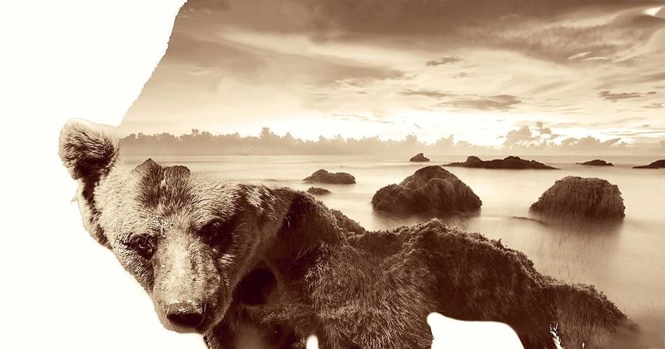 Orso Doubleexposure Waterscape Bear Light Brown White Background