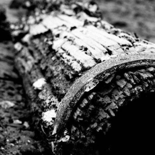 Driftwood. Sydneyinsty Sydney Sydneyharbour Instalove ig23 wood blackandwhite bestoftheday pylon random
